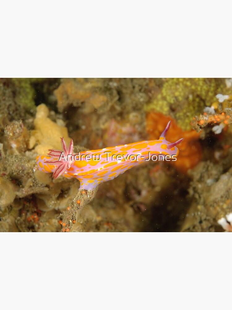 Nudibranch - Ceratosoma amoena by andrewtj