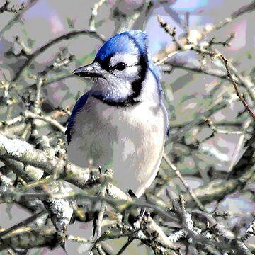Blue Jay by VeganBear