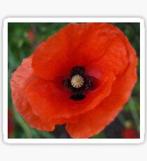 Rememberance Poppy Sticker