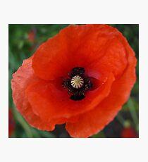 Rememberance Poppy Photographic Print