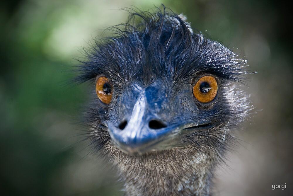 Emu by yorgi