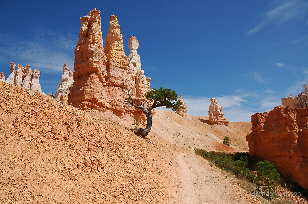The Lone Tree - Bryce Canyon National Park by Brendan Schoon