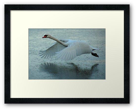 Flying Swan by Brendan Schoon