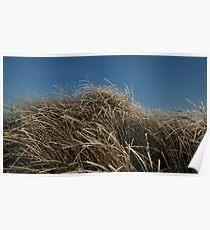 Frozen Dune Grass Poster
