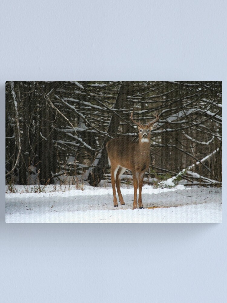 Alternate view of Buck in winter Canvas Print