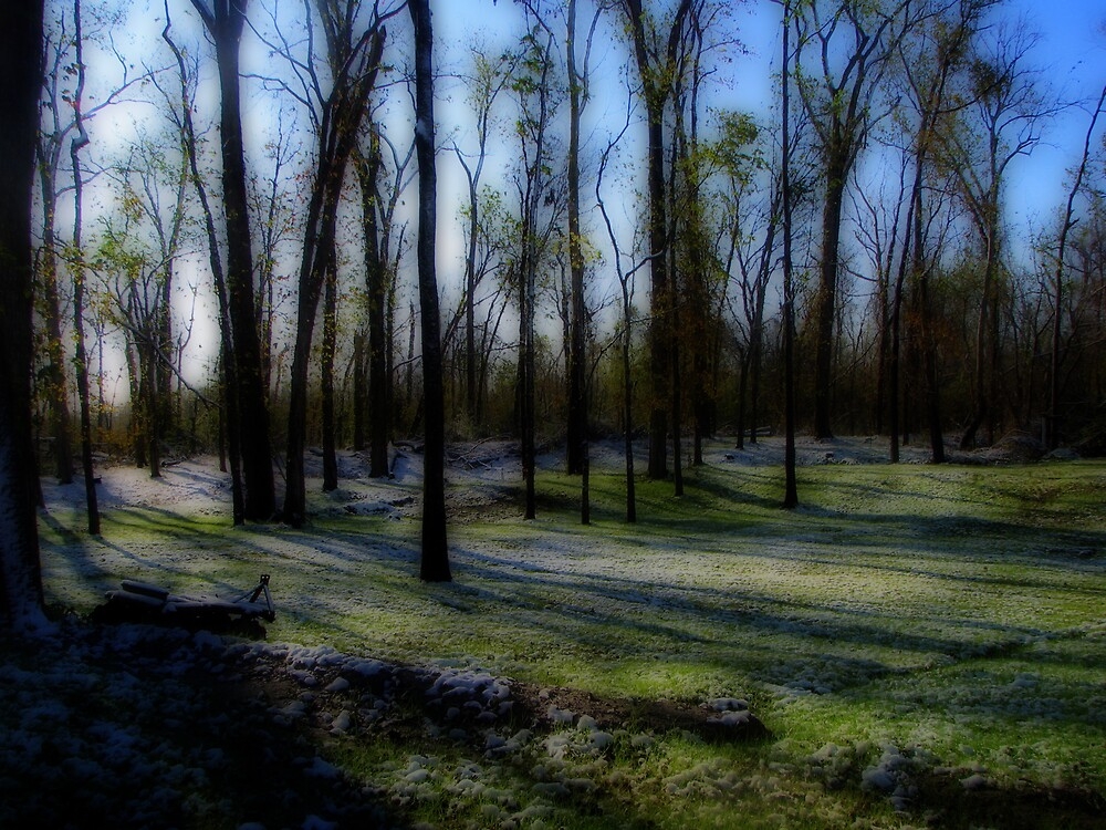 Trees, Shadows and Snow by DottieDees