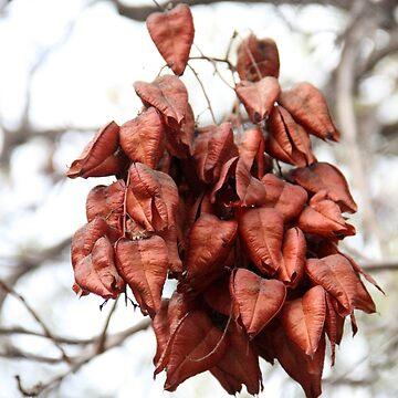 Fall color by agnessa38