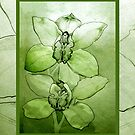 Green Orchid 2 by Patricia Howitt