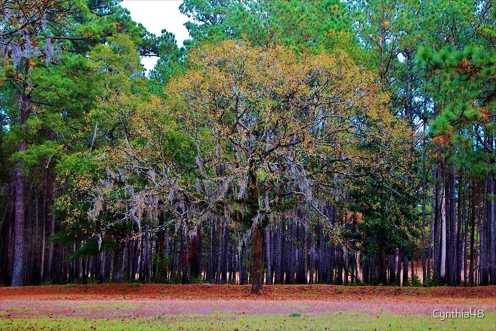 Pine Tree Landscape by Cynthia48
