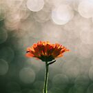 Bokeh Bath  by Victor Oliveira