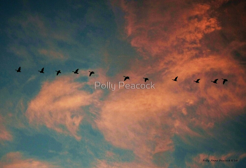 Geese Flying in a Sunset Laden Sky by Polly Peacock