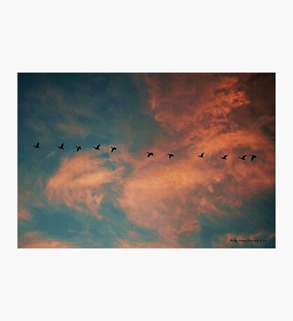 Geese Flying in a Sunset Laden Sky Photographic Print