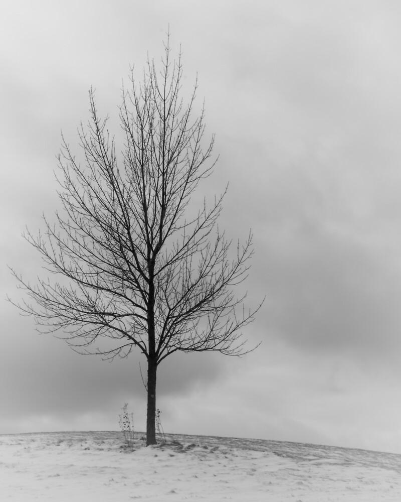 Winter tree by Yvette  Schneider-Little
