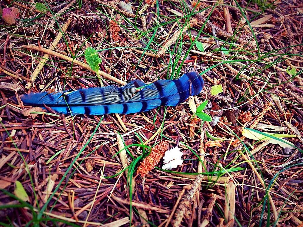 Blue Jay :) by derek1023