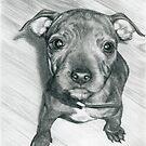 Puppy dog eyes by Samantha Norbury