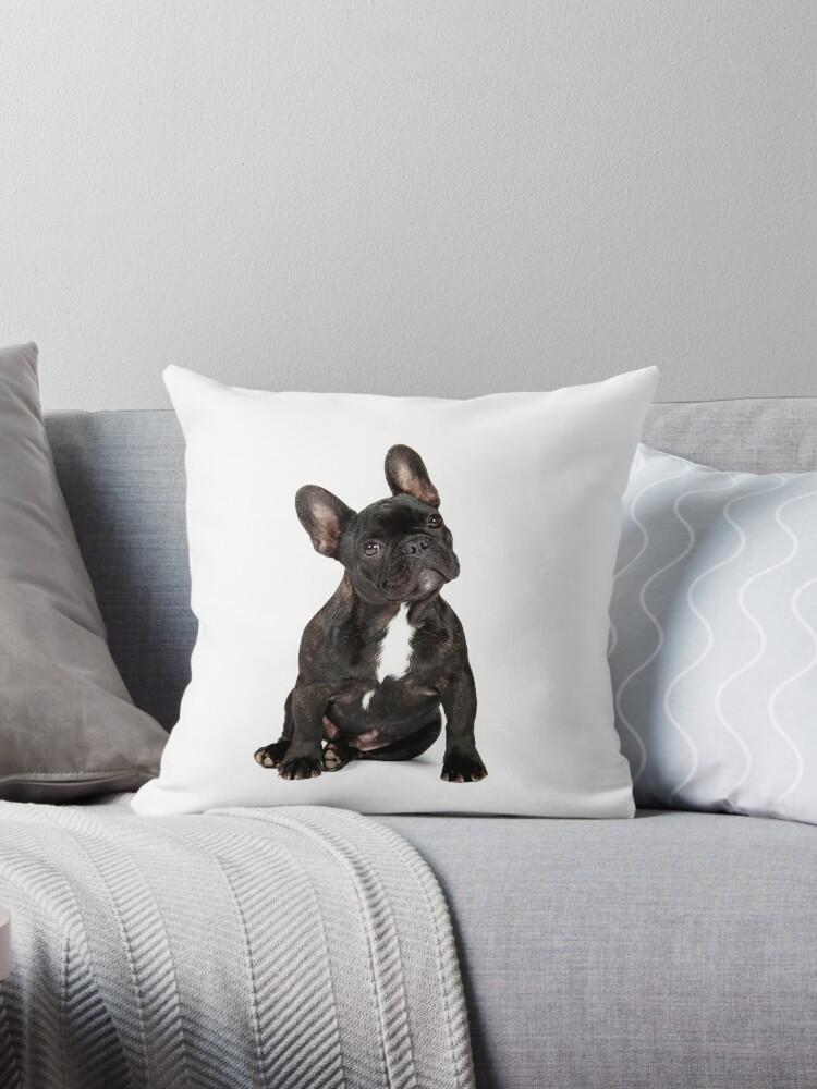 French Bulldog by mlorenz