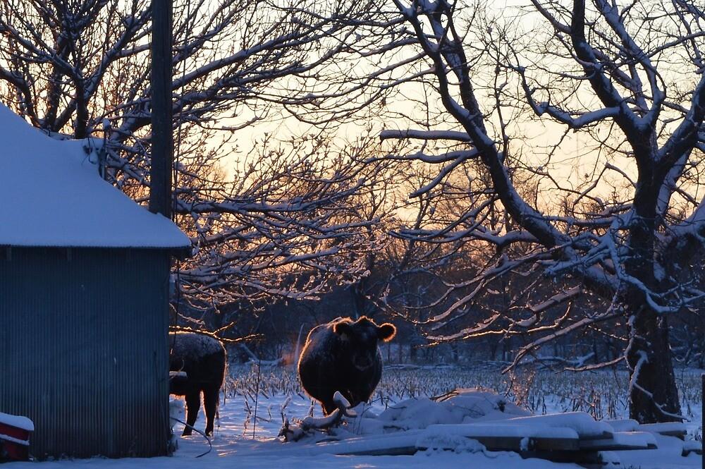 Bovine Sunrise by GMama