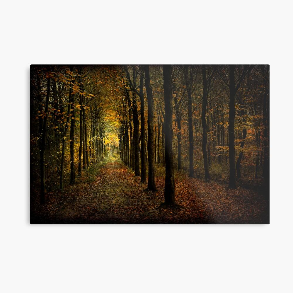Woodland, light Metal Print