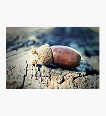 Great oaks from little acorns grow Photographic Print