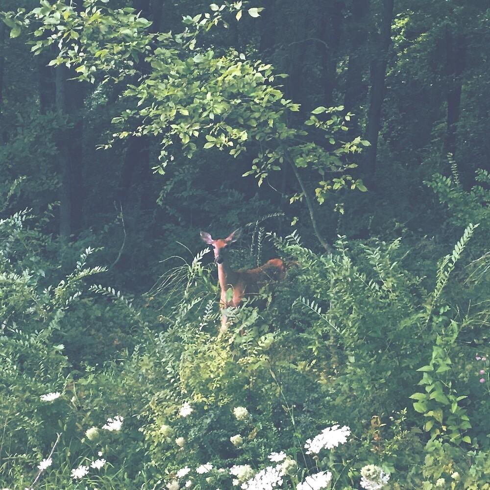 wildlife by ItsBritknee17