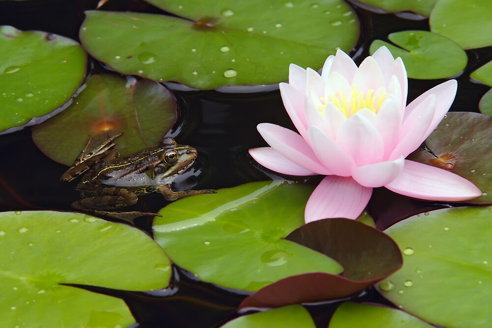 Flower and the Frog by Filipe Lopes
