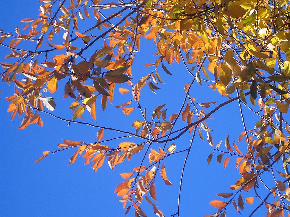 Autumn leaves in bright sunshine by eve9