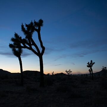 JOSHUA TREES AT SUNSET by RoscoeLiosis