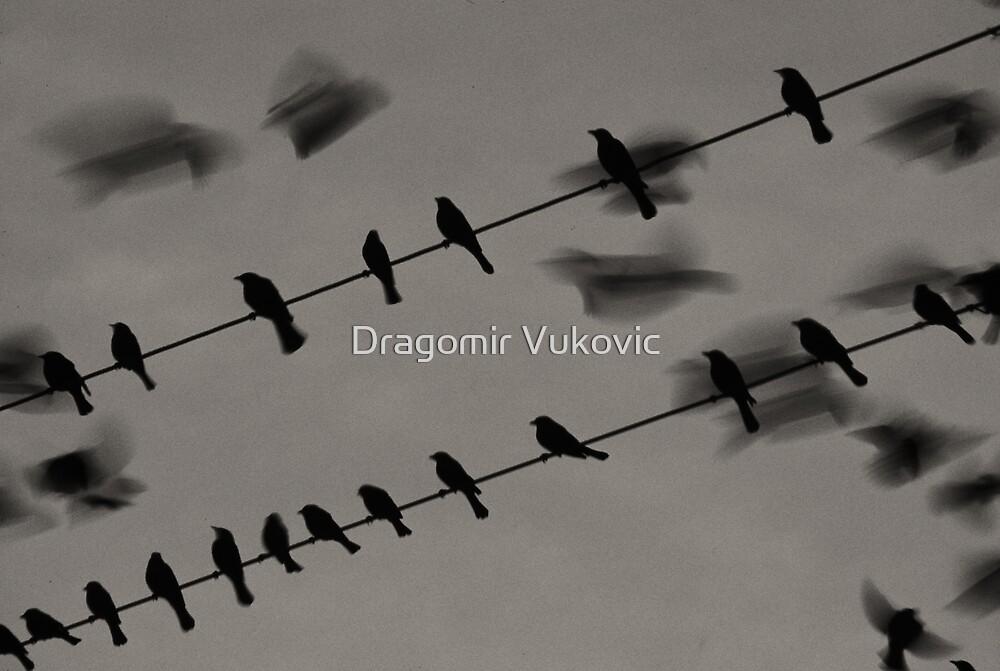 Go For It by Dragomir Vukovic