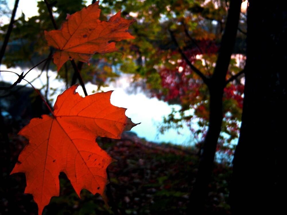 Leaf by brechu59