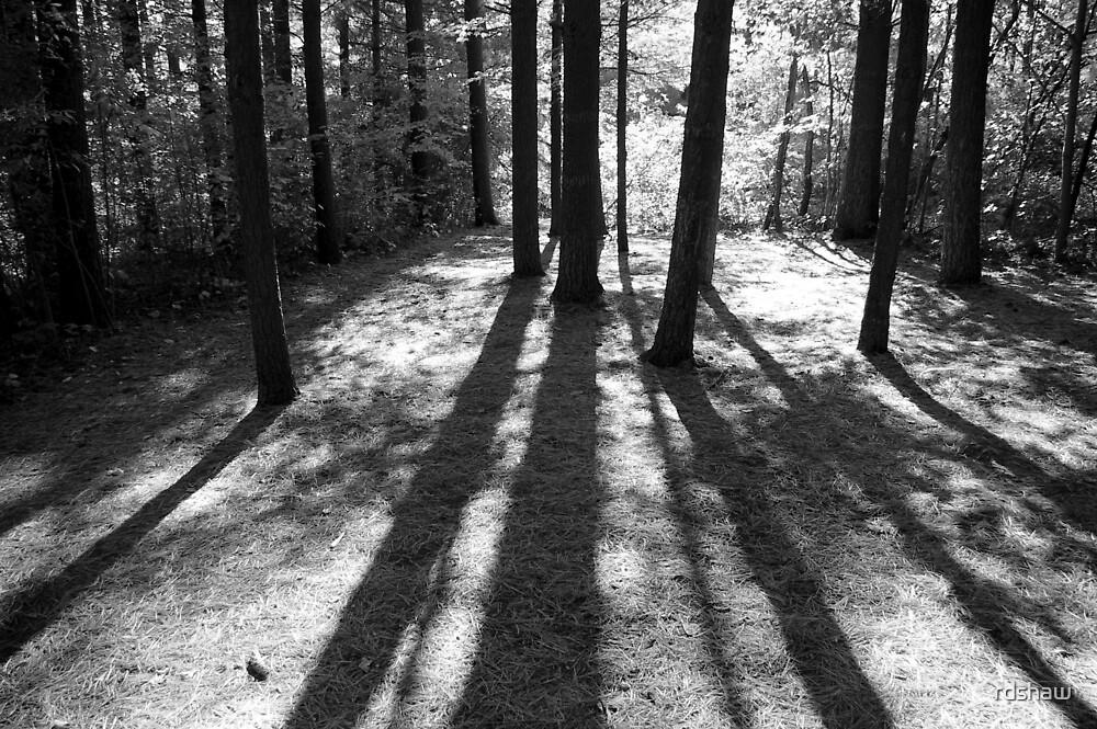 Sun Stripes by rdshaw