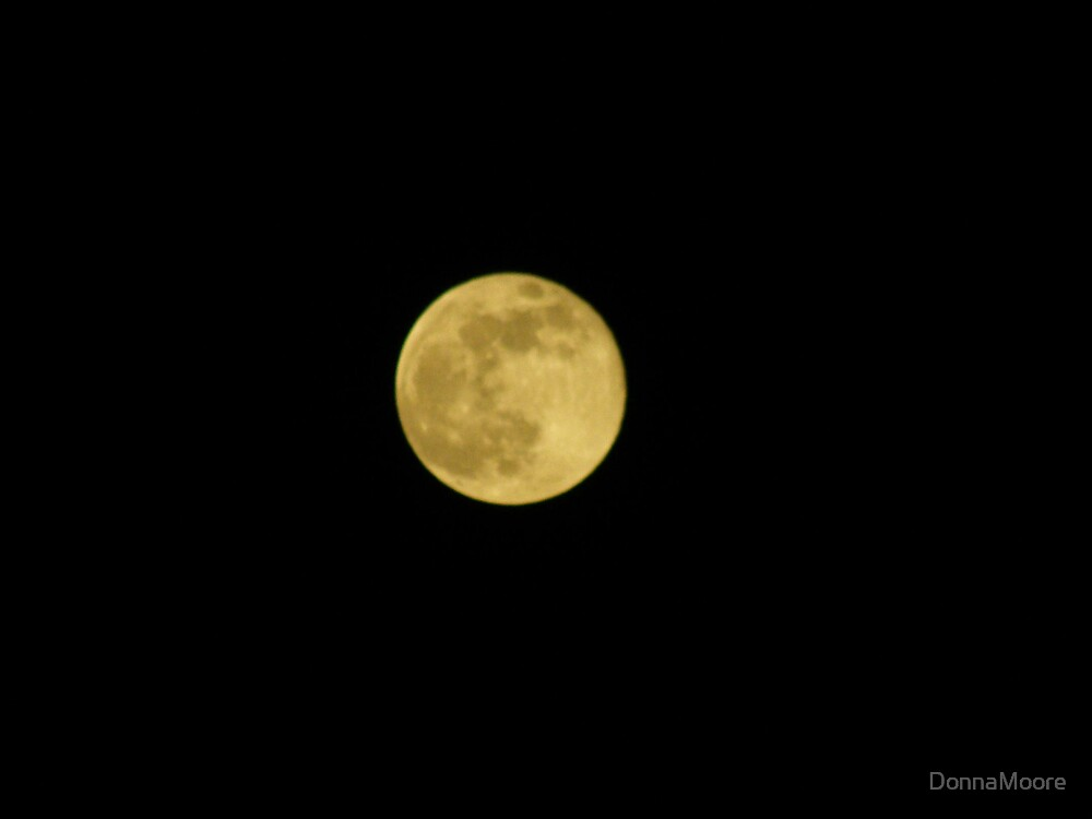 Biggest full Moon of the year... by DonnaMoore