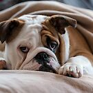 British Bulldog by M-Pics