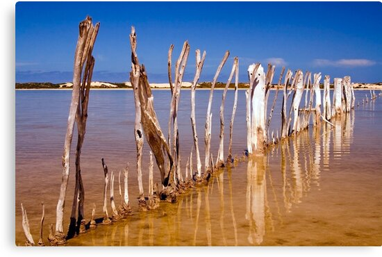 Fish Trap fence by Steve Chapple
