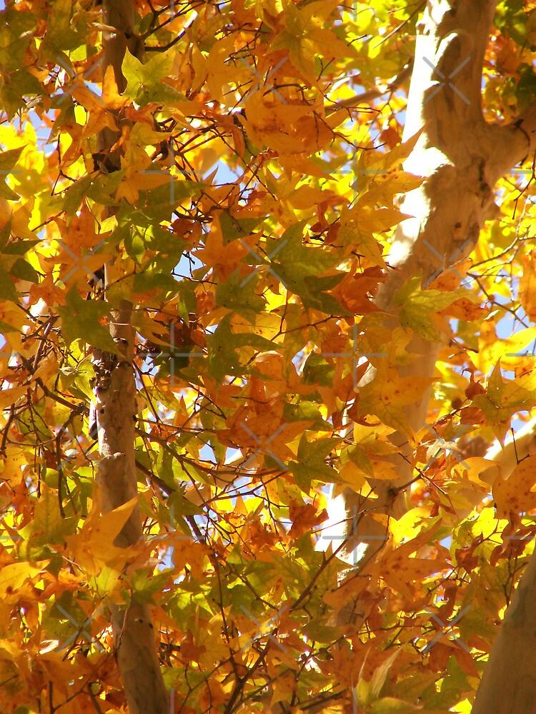 Ramsey Canyon Arizona - Fall abundance by Kimberly Miller