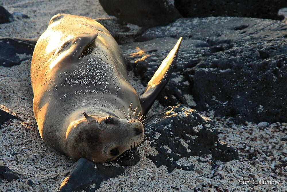 Sea Lion Goodbye by Sue  Cullumber