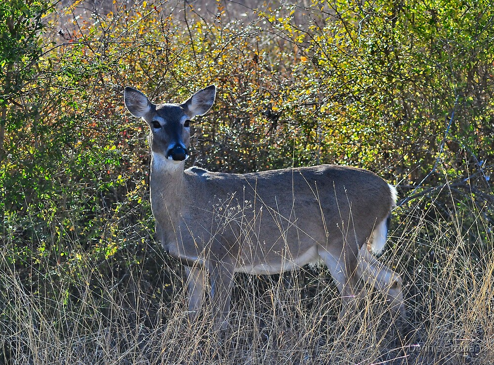 Evening Deer  by Dennis Stewart