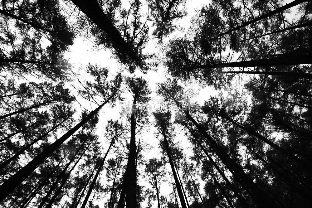 Trees by Richard Lewis