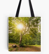 stump on logging place near forest Tote Bag
