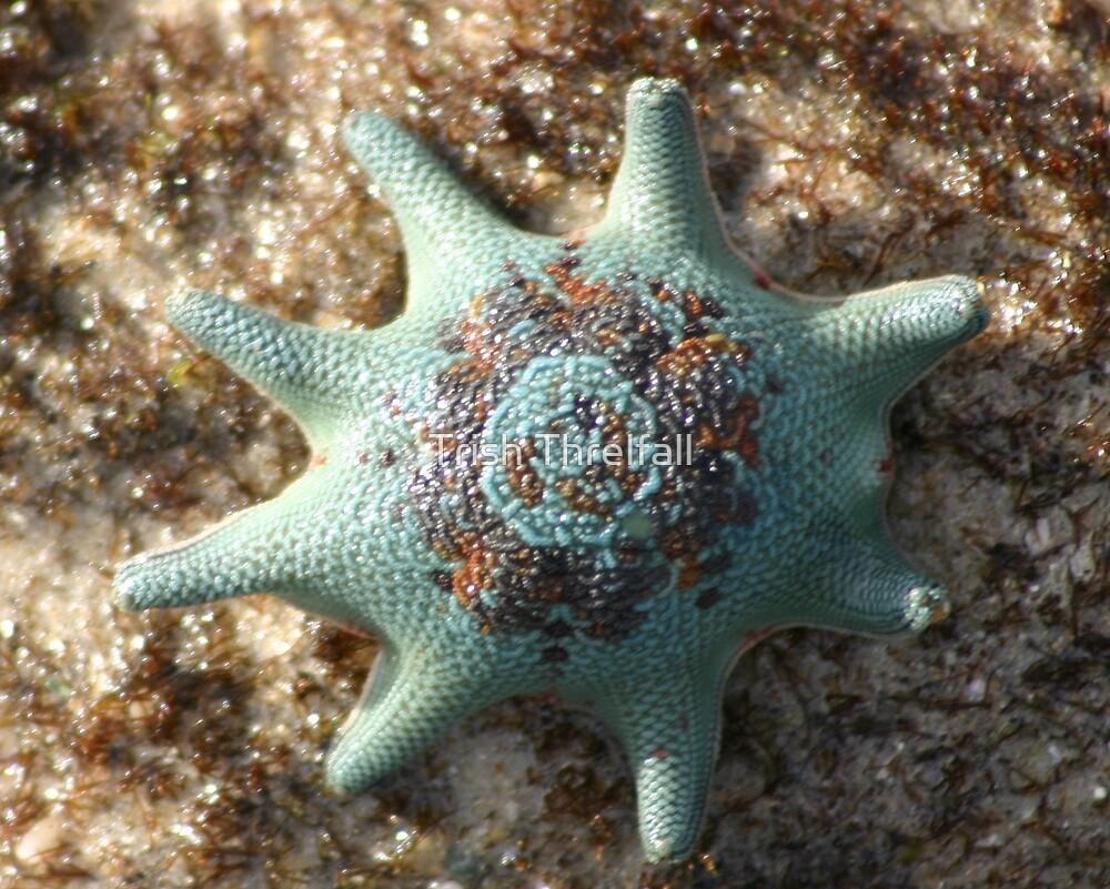 star fish by Trish Threlfall