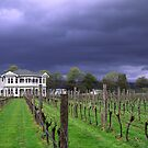 Moody Vineyard by John Violet