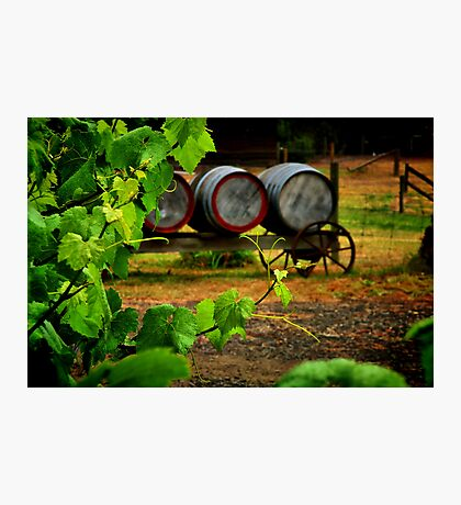 """Vine to Vintage"" Photographic Print"