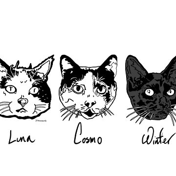 The Cats. by jtownsend