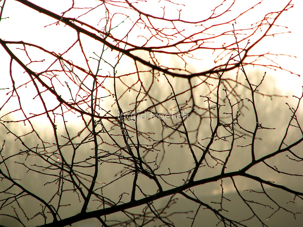 droplets on branches by ingrid froelich
