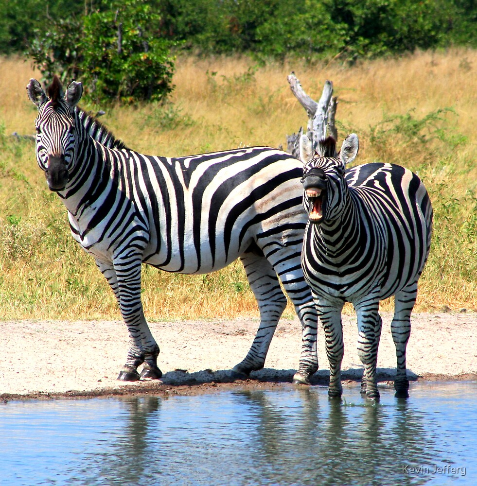 Zebra's at waterhole by Kevin Jeffery