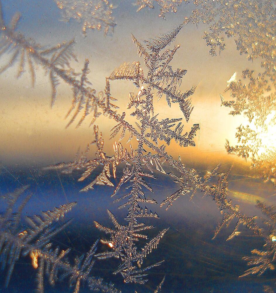 The Ice Plant by Ian Benninghaus