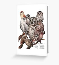 Owls of the Northeast Greeting Card