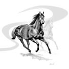 Master Hand (USA) Thoroughbred Stallion by Patricia Howitt
