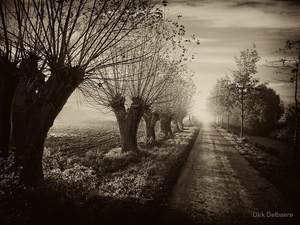 Path; willows b&w by Dirk Delbaere
