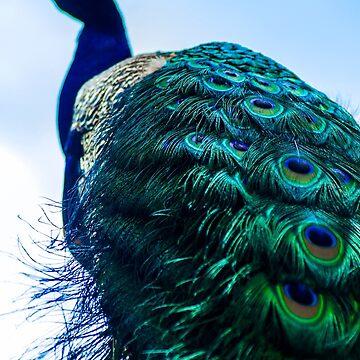 Peacock by KjunSL1
