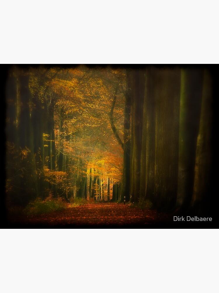 Light in woods by Delbaere
